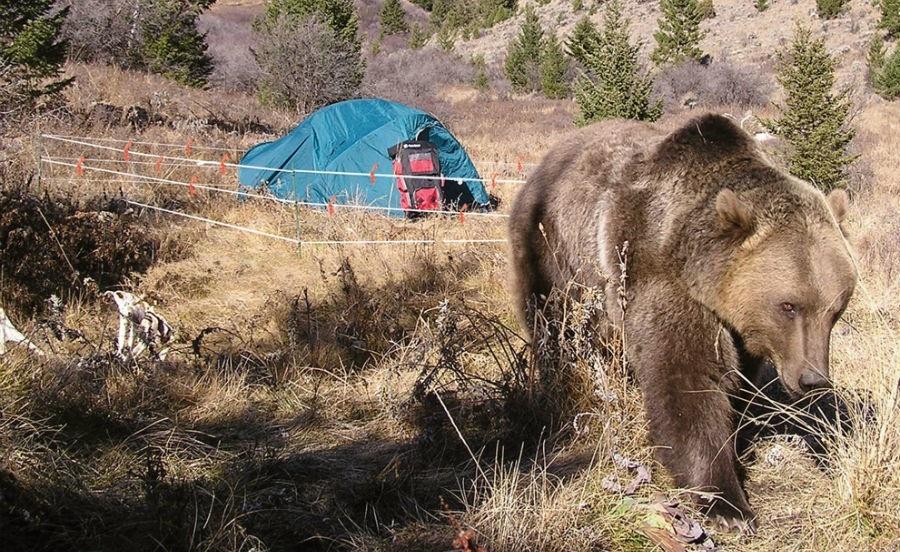 فنس الکتریکی مخصوص خرس
