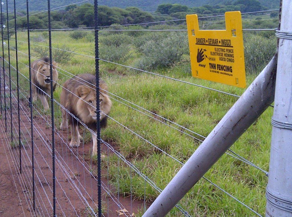 فنس الکتریکی مخصوص حیوانات وحشی