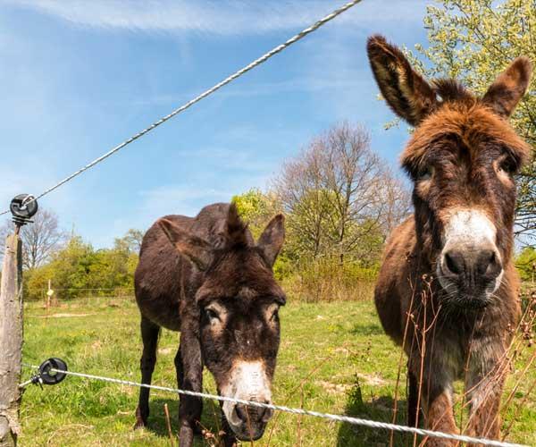 فنس الکتریکی مختص حیوانات اهلی