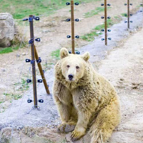 فنس الکتریکی خرس