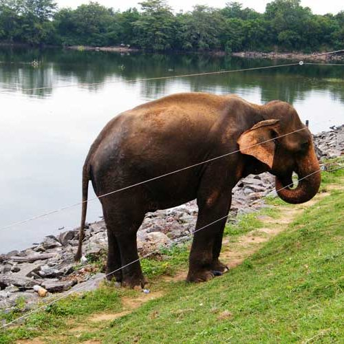 فنس الکتریکی حیات وحش فیل